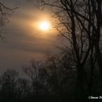 Couché de Soleil dans les Bois